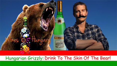 Hungarian Grizzly