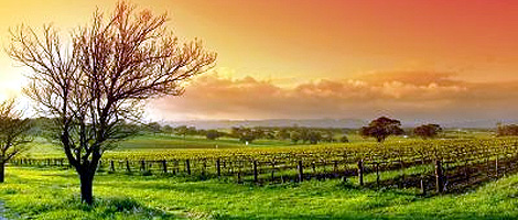 travel_barossa