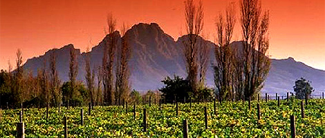 travel_stellenbosch